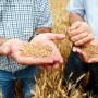 Agrárgazdaság